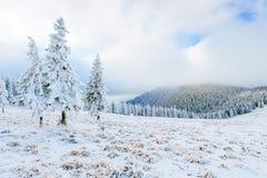 Sunny Winter Landscape Stockfotografie