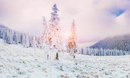 Sunny Winter Landscape Lizenzfreies Stockfoto