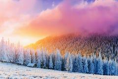Sunny Winter Landscape Stockfoto