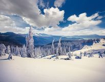 Sunny winter landscape in the Carpathian mountains. Royalty Free Stock Photos
