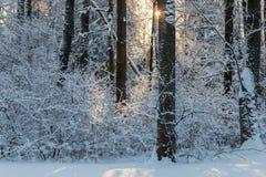 Sunny winter landscape stock photography