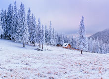 Sunny Winter Landscape Die Schönheit der Welt karpaten ukraine europa Lizenzfreie Stockfotos