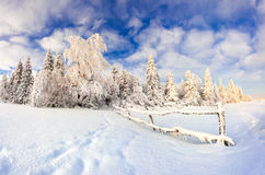 Sunny winter landscape in forest. Royalty Free Stock Photo