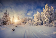 Sunny winter landscape in forest. Royalty Free Stock Image