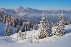 Sunny winter landscape Stock Photography