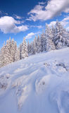Sunny winter landscape in mountain forest Stock Photos