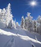 Sunny winter landscape in mountain forest Royalty Free Stock Image