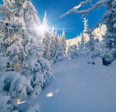 Sunny winter landscape in mountain forest Royalty Free Stock Images