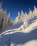 Sunny winter landscape in mountain forest Royalty Free Stock Photo