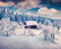 Sunny winter landscape in the mountain forest. Stock Images
