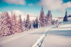 Sunny winter landscape in the mountain forest Stock Photo