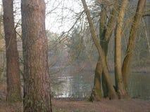 Sunny Winter-mening over meer door bomen stock foto