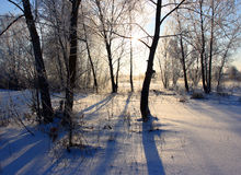 Sunny winter morning. Blue shadows of the trees in the sunny winter morning Stock Photos