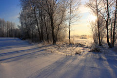 Sunny winter morning. Blue shadows of the trees in the sunny winter morning Stock Photography