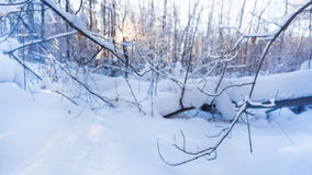 Sunny winter morning in the forest. Timelapse stock footage