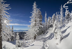 Sunny winter morning in mountain forest Royalty Free Stock Photos