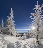 Sunny winter morning in mountain forest Royalty Free Stock Photography
