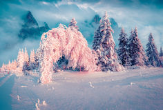 Sunny winter morning in the mountain forest after heavy snowfall Stock Photography