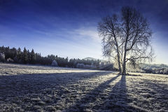 Sunny winter morning Stock Image