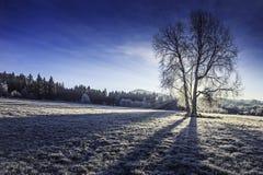 Sunny winter morning Stock Image