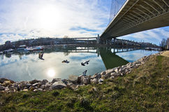 Sunny winter morning under the cable bridge on Sava river Royalty Free Stock Photography