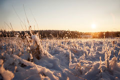 Sunny winter nature landscape Royalty Free Stock Photo