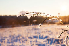 Sunny winter nature landscape Royalty Free Stock Photography