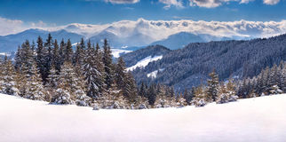 Sunny winter panorama of the mountains Stock Image