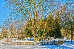 Sunny winter park Stock Photography