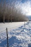 Sunny winter's day on the prairie. Stock Photos