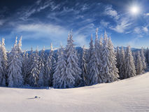 Sunny winter scene in the Carpathian mountains. Stock Photography