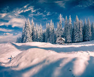 Sunny winter scene in the mountain forest Stock Image