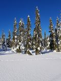 Sunny winter wonderland and a great landscape. The sun is shining bright on the forest stock images