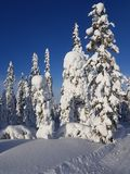 Sunny winter wonderland and a great landscape. The sun is shining bright on the forest royalty free stock images
