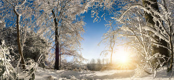 Sunny winter wonderland Stock Photos