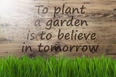 Sunny Wooden Background Gras, citationsteckenväxtträdgård tror i morgon Arkivbilder