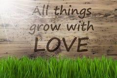 Sunny Wooden Background, Gras, citeert Alle Dingen kweekt Liefde Royalty-vrije Stock Afbeelding