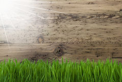 Sunny Wooden Background, Gras, Copy Space Royalty Free Stock Image
