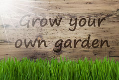 Sunny Wooden Background, Gras, Grow Your Own Garden Royalty Free Stock Images