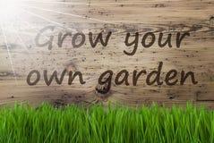 Sunny Wooden Background, Gras, kweekt Uw Eigen Tuin Royalty-vrije Stock Afbeeldingen