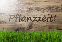 Sunny Wooden Background, Gras, Pflanzzeit Means Planting Season. German Text Pflanzzeit Means Planting Season. Spring Season Greeting Card. Sunny Aged Wooden Stock Photography