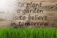 Sunny Wooden Background, Gras, Quote Plant Garden Believe Tomorrow. English Quote To Plant A Garden Is To Believe In Tomorrow. Spring Season Greeting Card. Sunny Stock Images