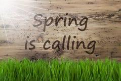 Sunny Wooden Background, Gras, ressort des textes appelle photographie stock