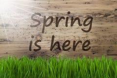 Sunny Wooden Background, Gras, ressort des textes est ici images stock