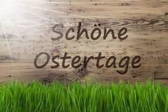 Sunny Wooden Background, Gras, Schoene Ostertage significa Pascua feliz Imágenes de archivo libres de regalías