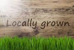 Sunny Wooden Background, Gras, textotent cultivé sur place images libres de droits