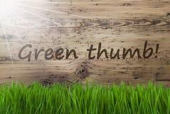 Sunny Wooden Background, Gras, textotent le pouce vert photographie stock