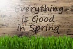 Sunny Wooden Background, Gras, todo es bueno en primavera Fotografía de archivo libre de regalías