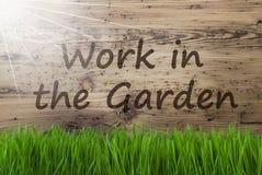 Sunny Wooden Background, Gras, travail des textes dans le jardin photographie stock