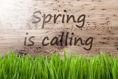 Sunny Wooden Background intelligent, Gras, ressort des textes appelle images stock
